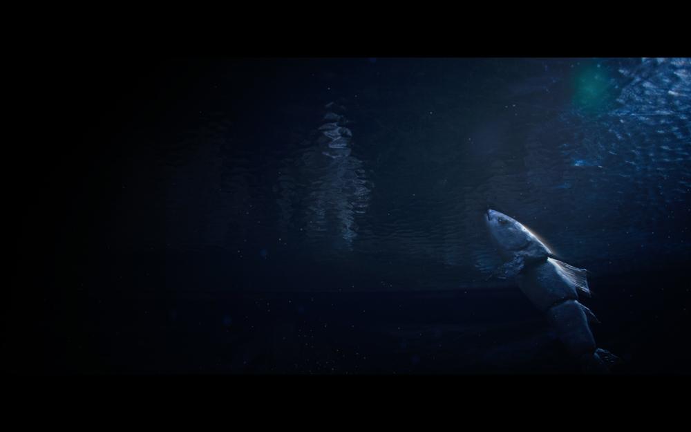 fish-olga-lunina.jpg