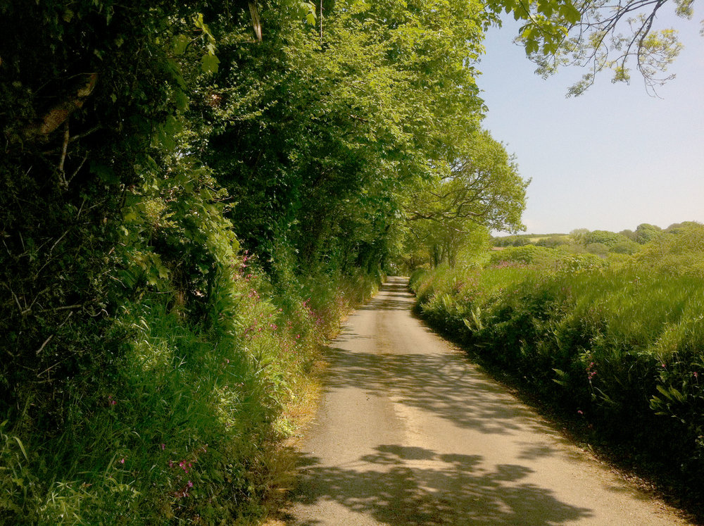 Looking up the driveway in summer at Cornwall wedding venue Pengenna Manor.jpg