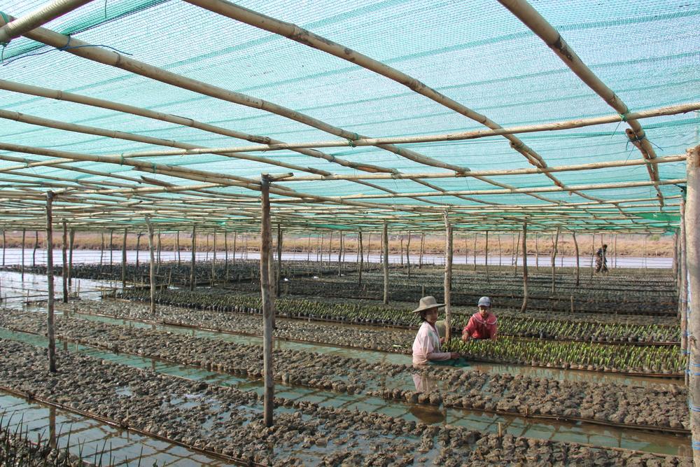 500 000 seedlings in our nursery