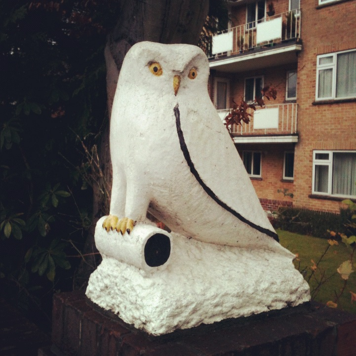 This little fella resides somewhere near the Folk office. Why he's chosen a spot outside somes flats as his residence no one knows but people remember his curious stare wherever they go.