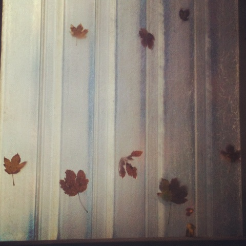 Autumn is here, we're starting to collect leaves on the Folk roof #autumn #leaves