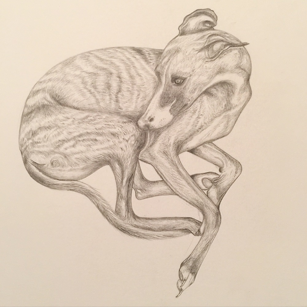 Whippet Drawing | Dog Art | Lucian Freud | Pet Portrait | Custom Dog Portrait