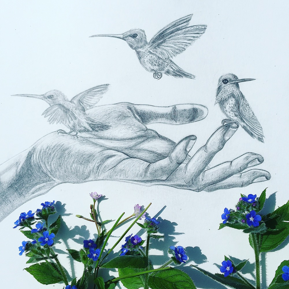 Hummingbird Drawing | Pencil Portrait