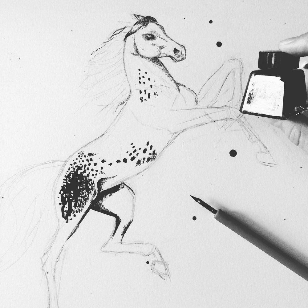 Appaloosa Ink Drawing