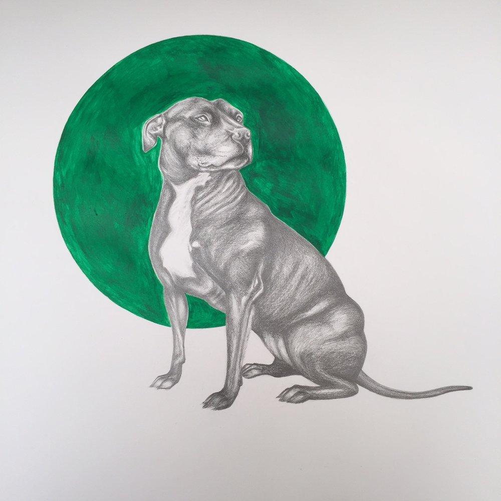 Pencil Portrait |Staffordshire Bull Terrier | Art Commissions