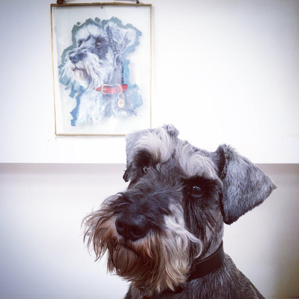 tales of teddy dog portrait