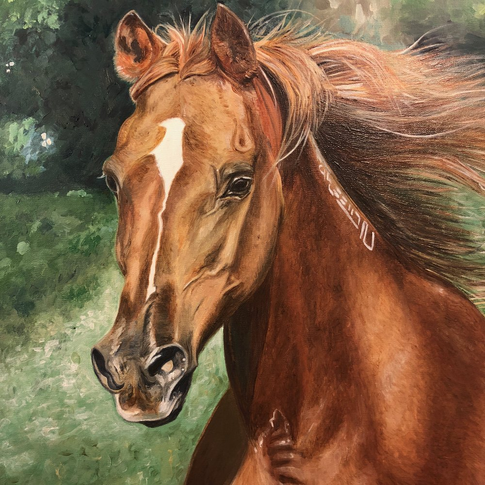 arabian horse- paint horse- horse paintings on canvas