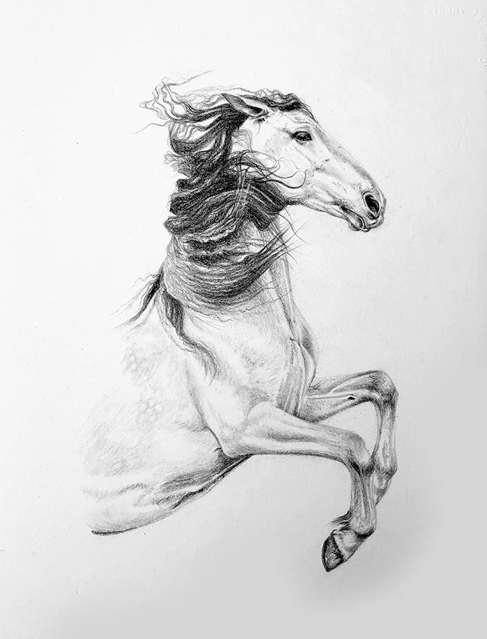 Rearing Spanish Horse Drawing | Equine Art | Horse Art | Pencil Portrait
