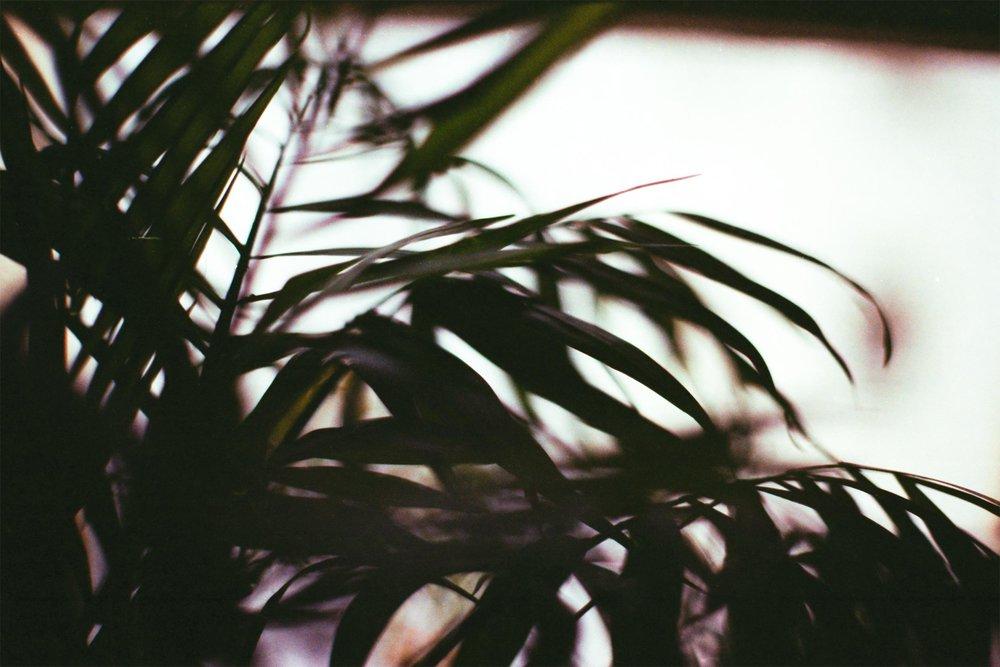35mmFilmPlantBotanicalIndoor.jpg