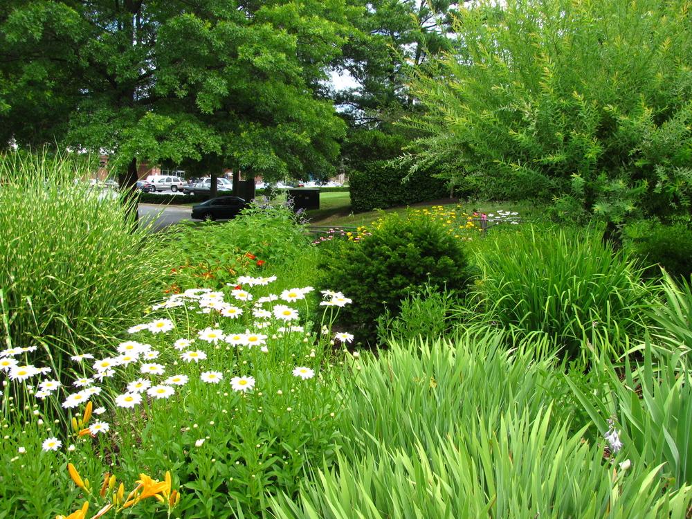 Peace Garden Summer.jpg