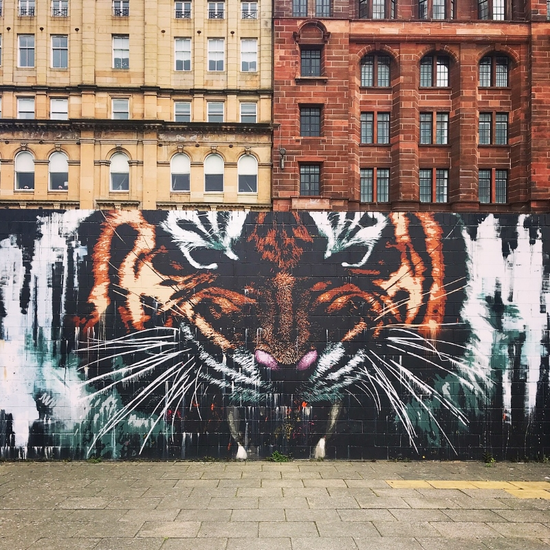 Glasgow Tiger Mural | KLINGATRON - flick through  more here