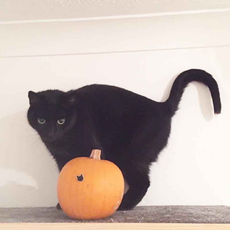 Toby Cat living his best Halloween life back in 2016 👻