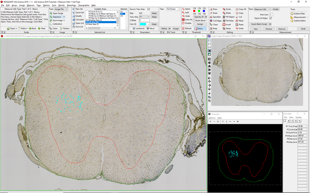 Cell Mapping and Analysis