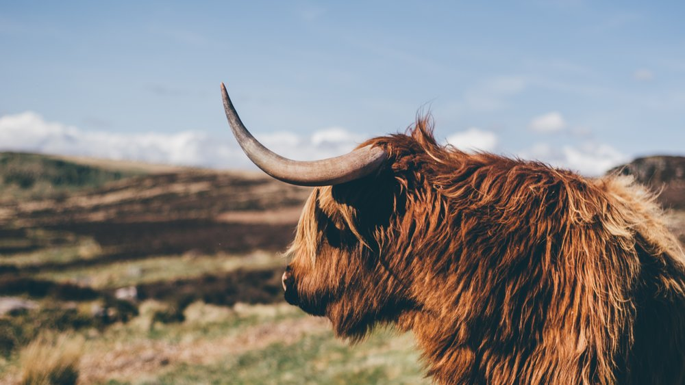 Scots FAQ: Do you know your dinny from your dinna?