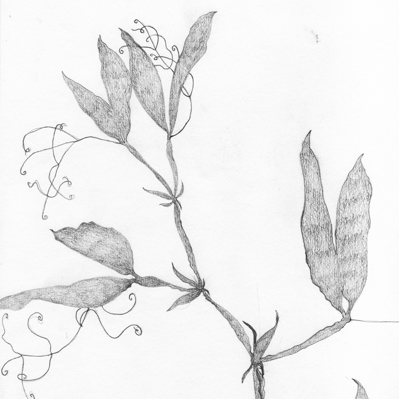 Plant Sketches | Helen Poremba Textile Art & Sewing Classes