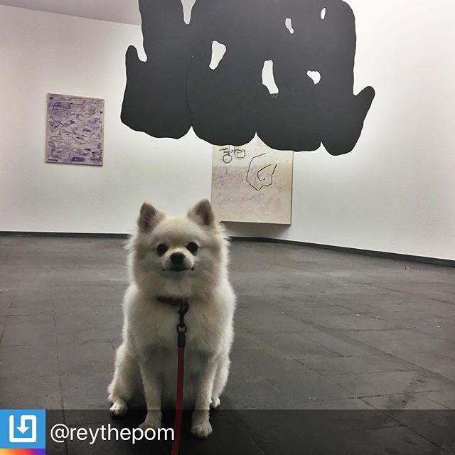 Meet Reyka. She's currently in Frankfurt, Germany enjoying new works by Deborah Nerlich that opened last night. What's your pup up to on this #artdogsaturday? Repost @reythepom:  exhibition by @deborahnerlich @theresagirl2000 😍#dogumenta #dogslikearttoo