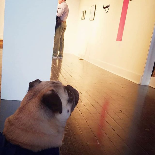Happy #artdogsaturday 🎨🐾We loved seeing @chewiethespokanepug contemplating the new exhibtiton at Saranac Art Projects curated by @remelisacullitan. 💯 tag us in your #artdog adventures. You might be surprised to find out your pup has a nose for art! Only some art galleries and very few museums allow dogs to visit — and even then, the art is not often accessible to them. That's why created #dogumenta — so culture hounds of all breeds and species can enjoy art together! 🐩🐕❤️ Look out for news about our upcoming LA exhibition! #repost #pugsofinstagram #instapug #culturehound #spokaneart #artforeveryone #happysaturday