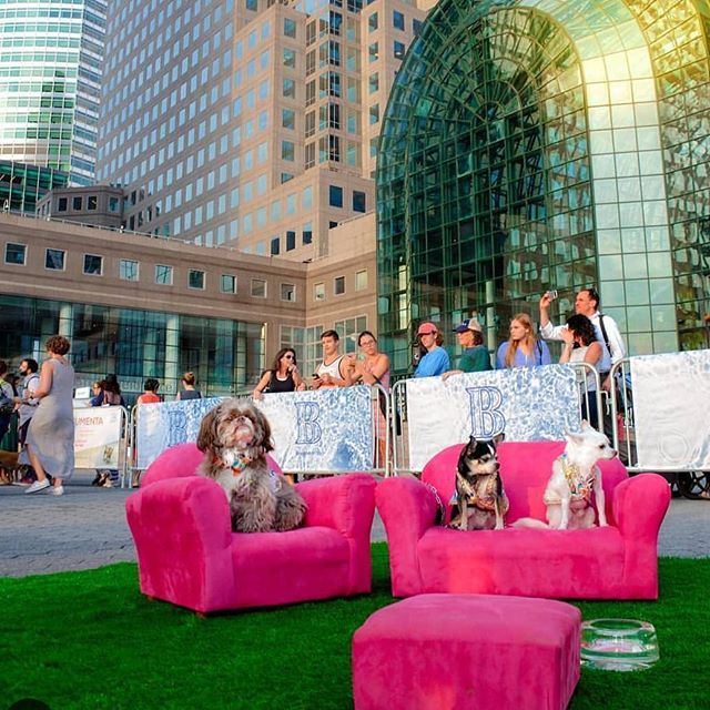 NYC Culture hounds Bogie, Kimba and Henry felt right at home in this art installation by Graham Caldwell #tbt to our first exhibition FOR dogs at @brookfieldplny last August @artsbrookfield we can't wait for you to see what we've cooked up for our LA exhibition coming in September! #culturehound #artdog #nycart #publicart #artforevertone #gallerydog