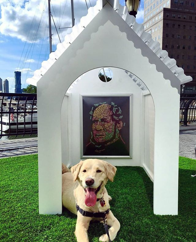 A house for art and dogs! #tbt our first exhibition in NYC last fall when Gehrig and thousands of other culture hounds like him got to explore art on their own terms! ❤️📸@gehrig_the_golden #culturehound #artdog #publicart #artforevertone #dogslife #dogstagram #goldenretriever
