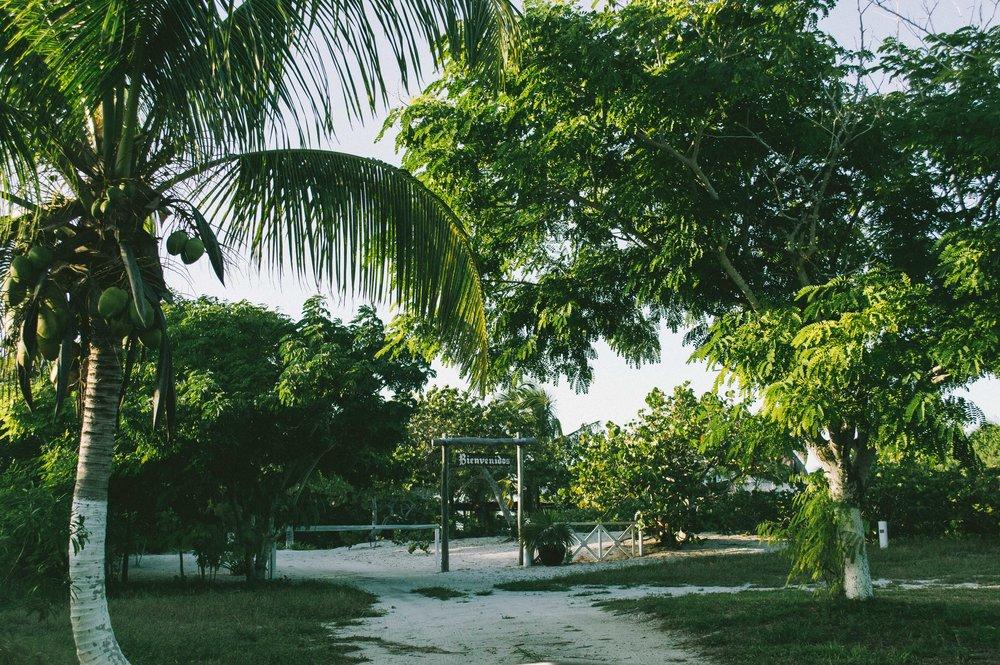 Chicxulub Puerto