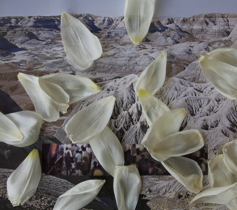 Ultrachrome print of collage and tulip petals