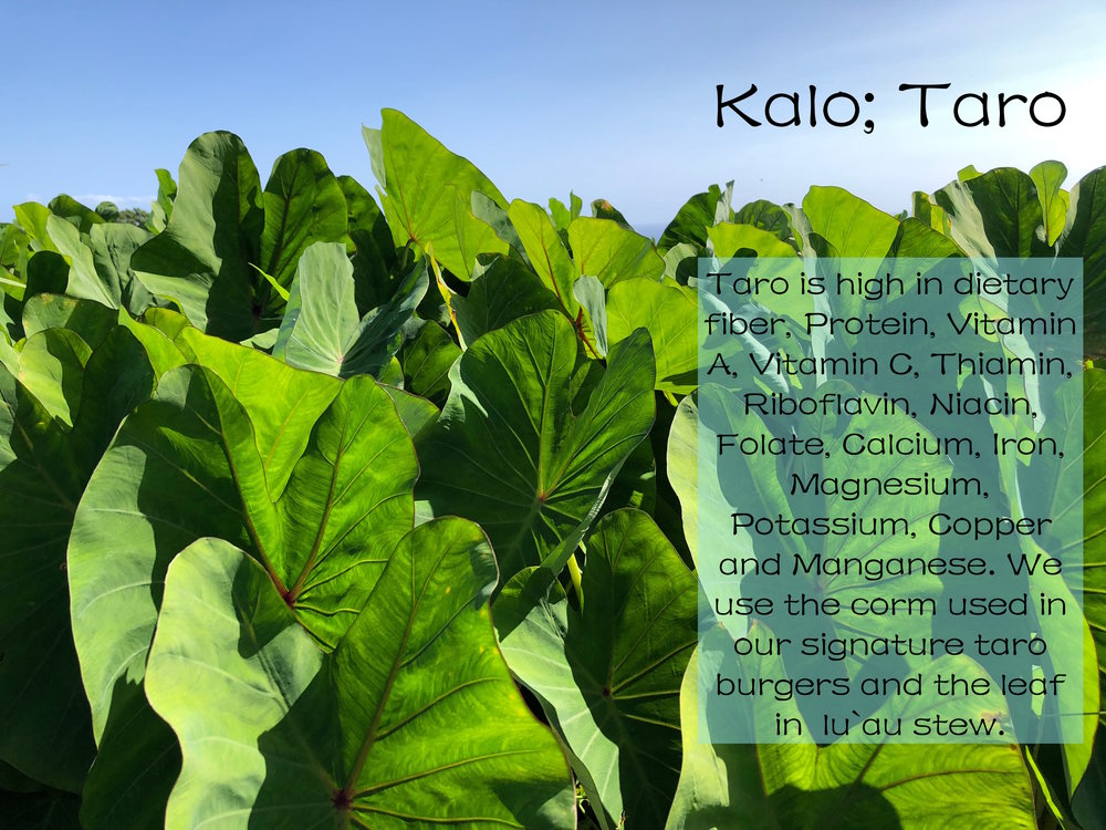 kalo patch with writing.jpeg