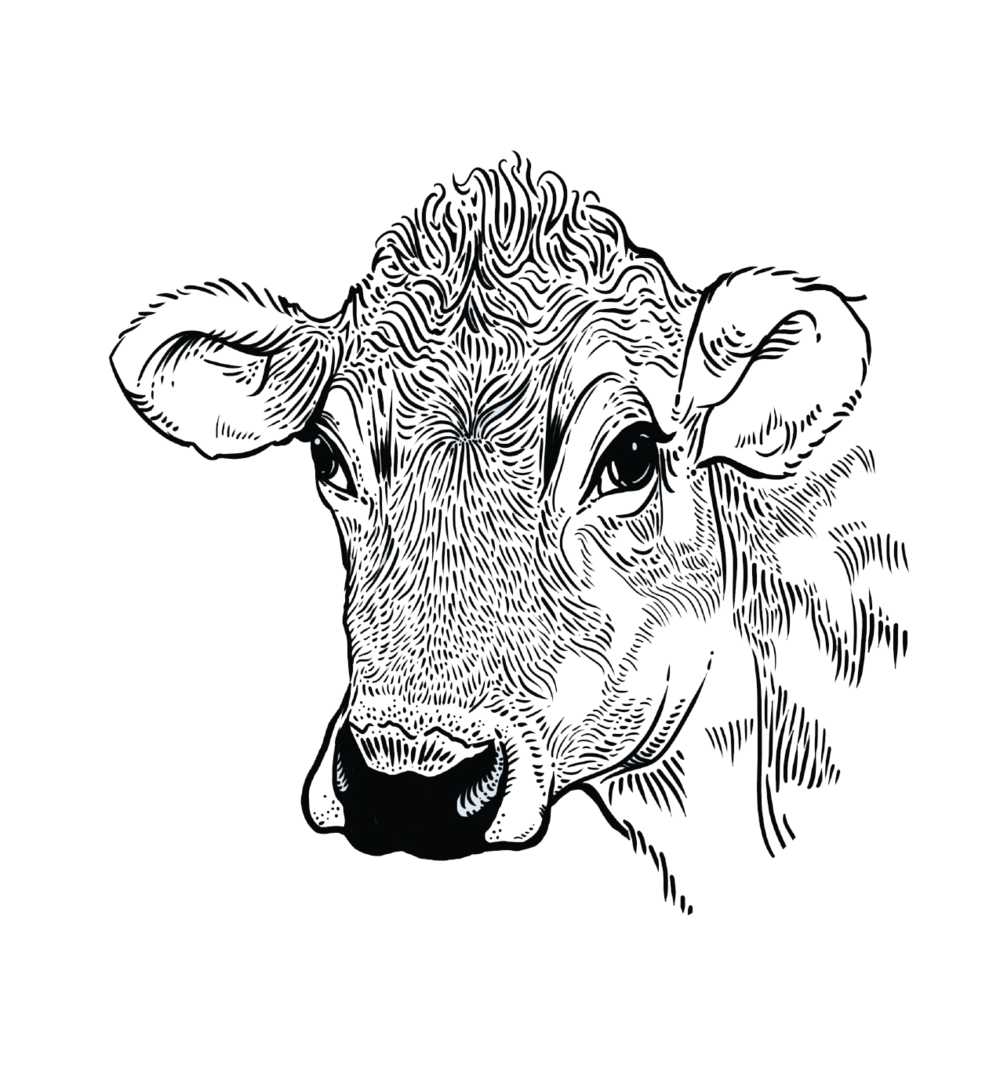 Cow_2.png