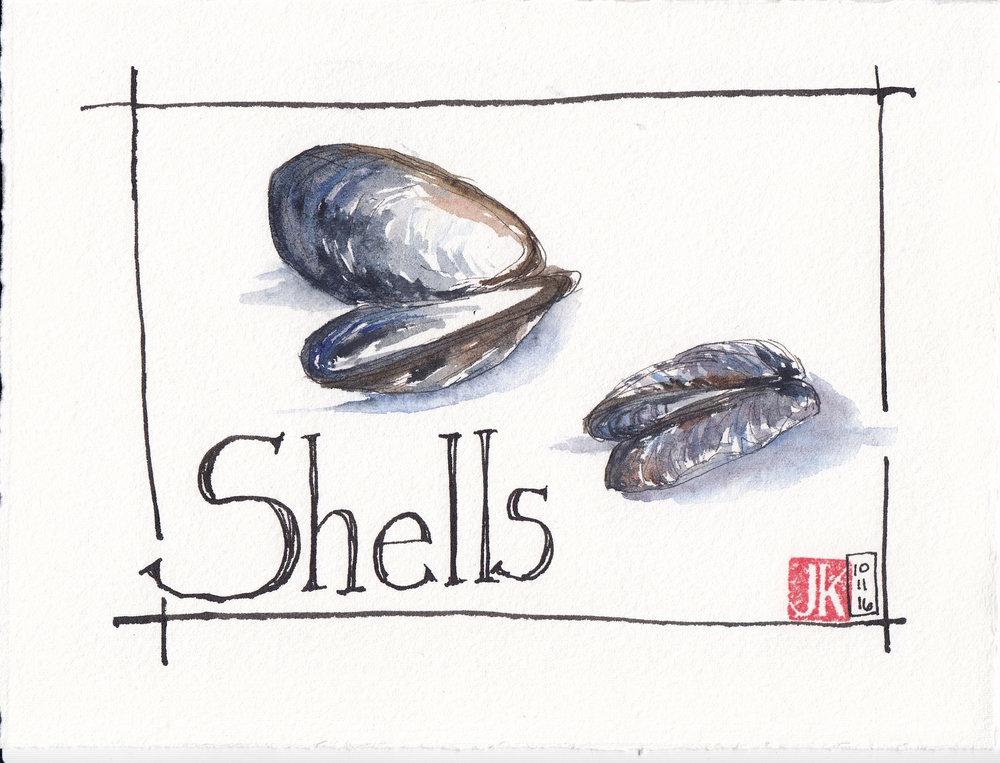 Shells I found on near the cabin