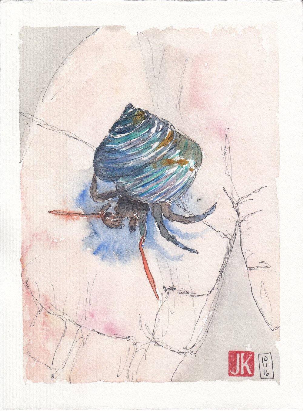 A hermit crab with a beautiful iridescent shell