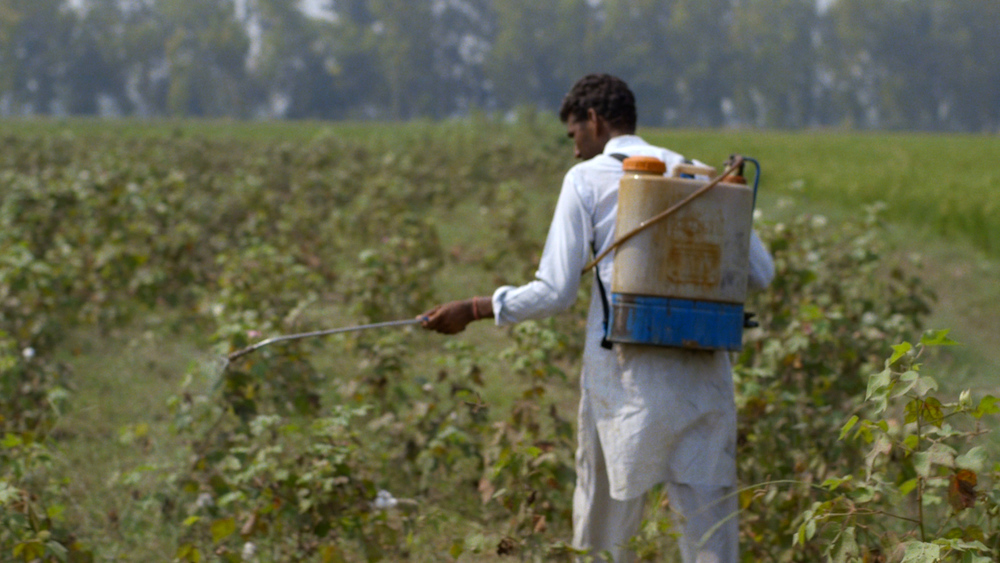 Cotton farmer, from The True Cost. Image  source .