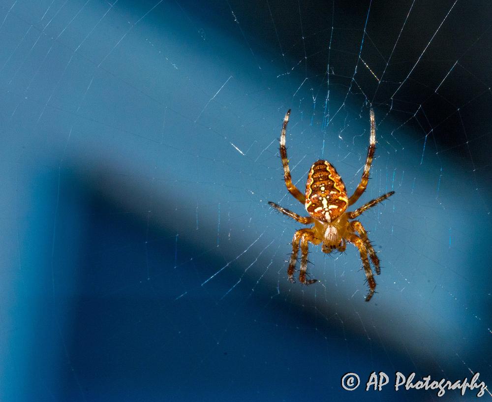 pavouk+copy_small.jpg