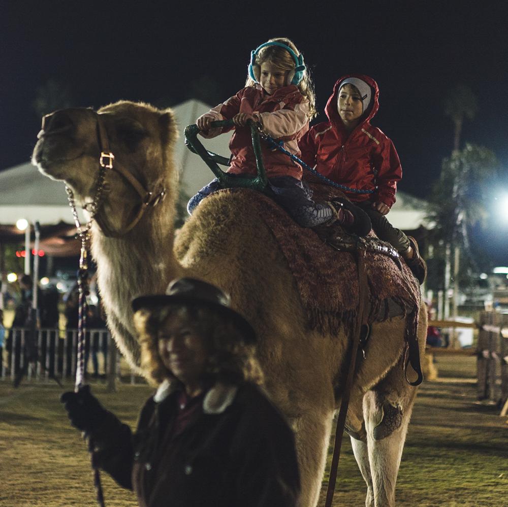 camel-rides.png