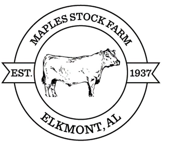 Maples Stock Farm | Alabama Registered Angus Cattle