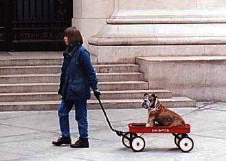 reenactment photo of bulldog rescued on 9-11