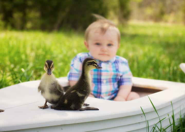 baby boy with ducks