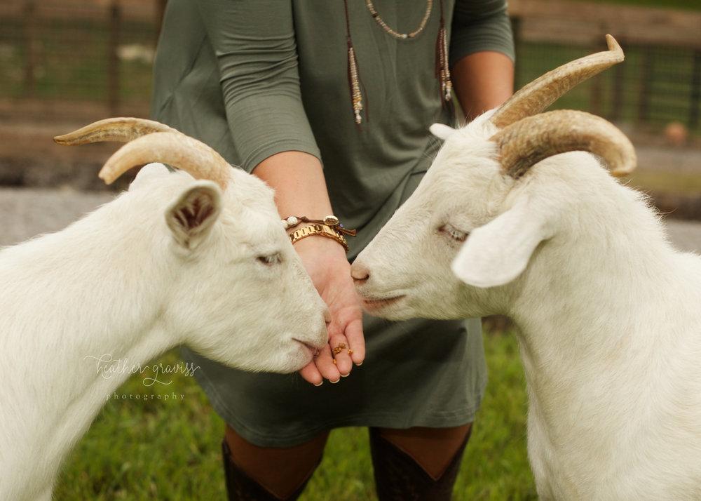 Lebanon tn senior with goats