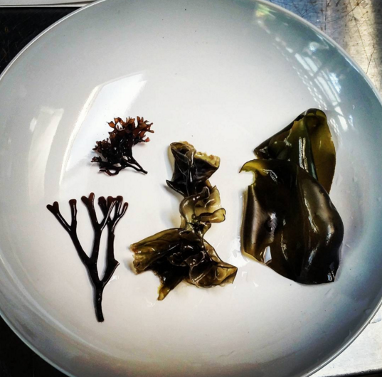 Local Harvested Seaweed from California Coast