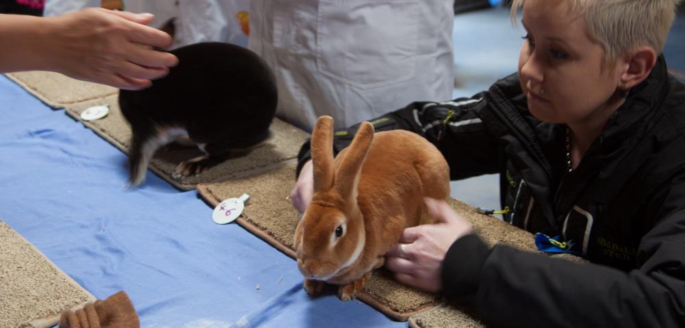 Rabbits page image.jpg