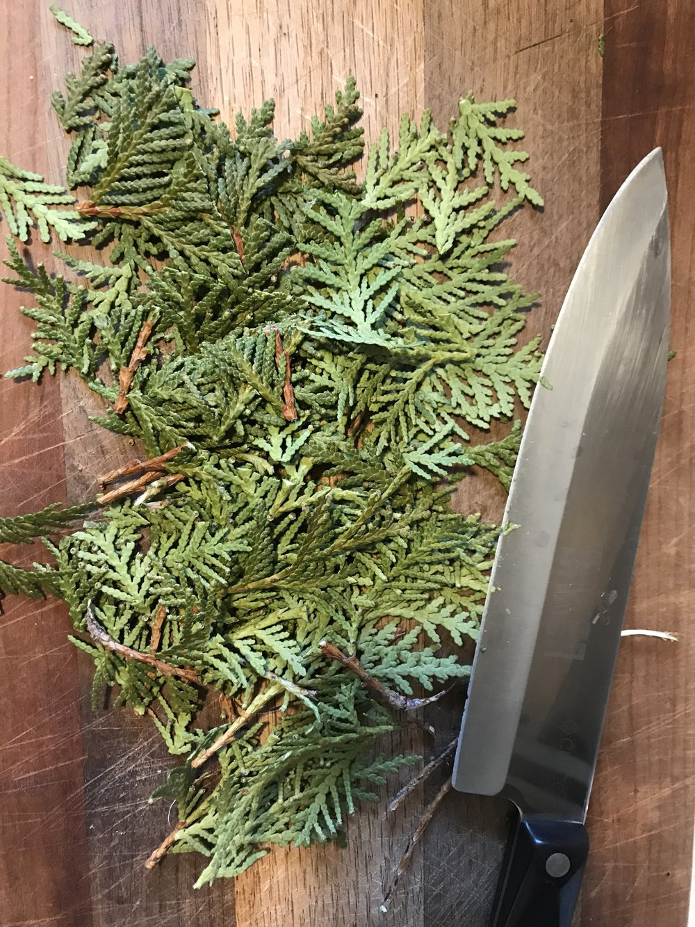 Chopped Cedar  - Nothing beats not having scurvy