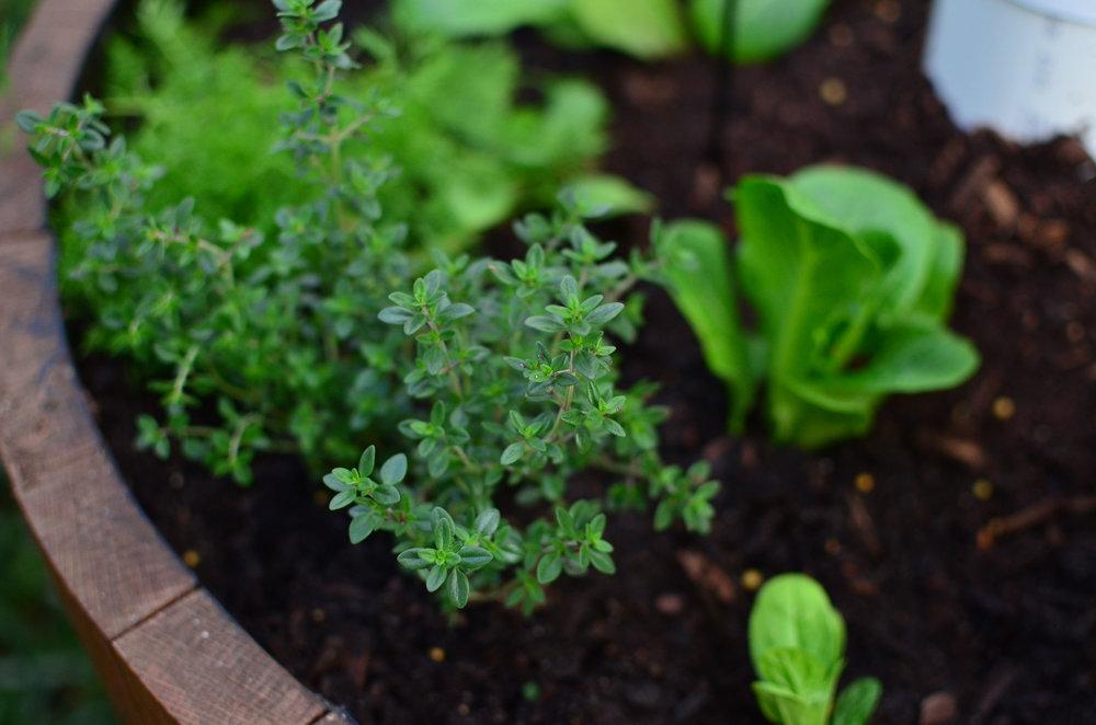 vege garden.jpg
