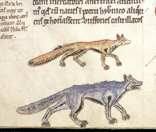 fox-wolf-11v.jpg