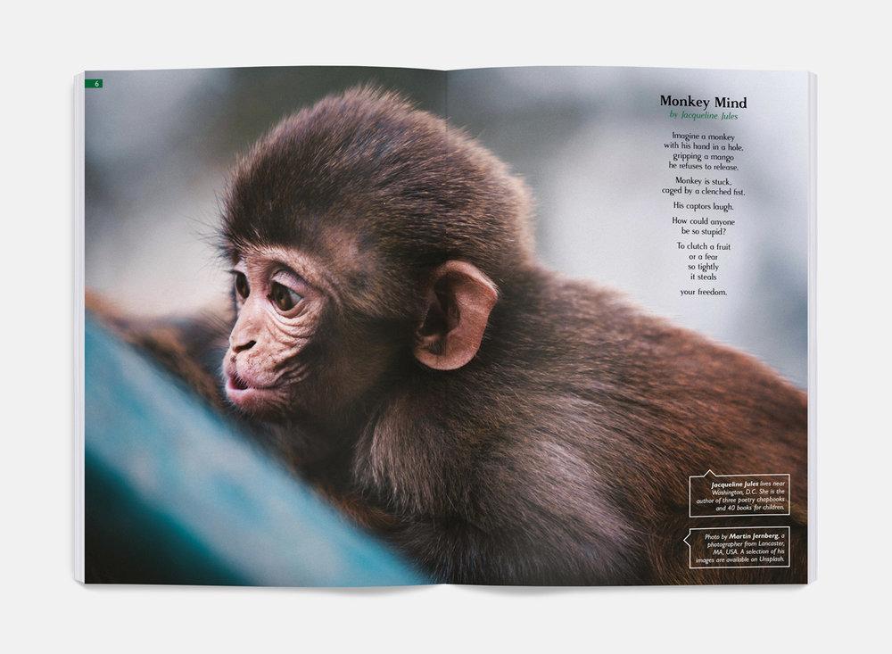 iss8-monkey-spread.jpg