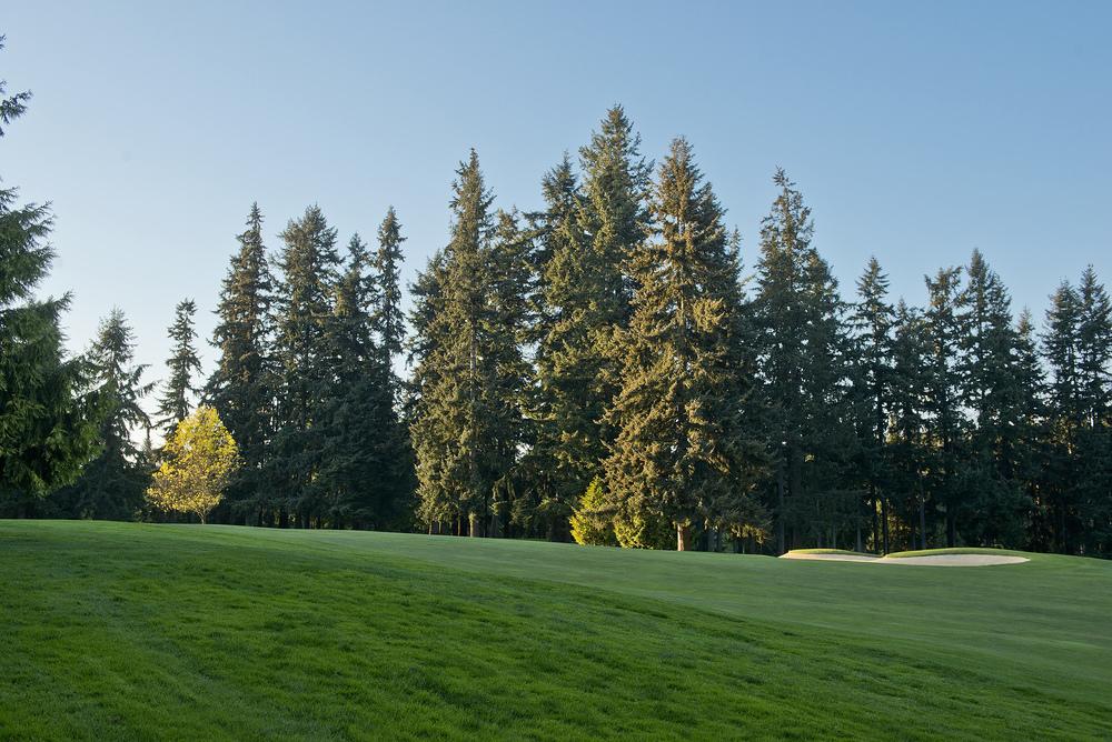 golf course 2.jpg