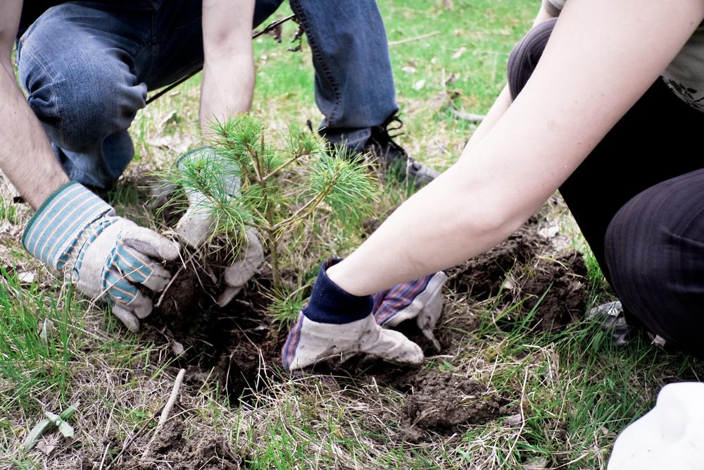 Когда сажать дерево на участке 535