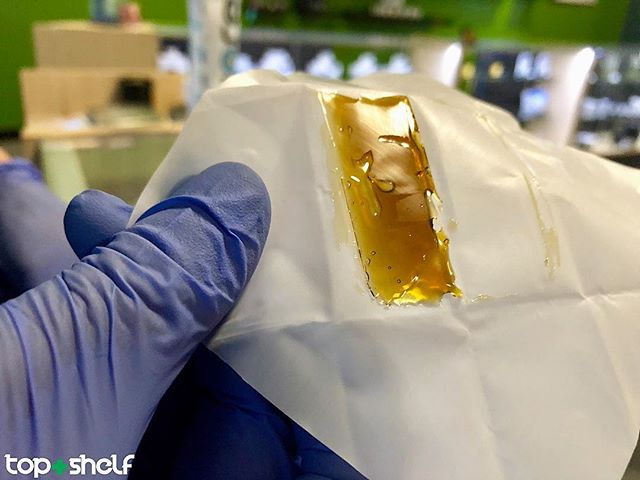 Brand new in-house shatter processed by  @newt_brothers_ii meet Florida og x our new genetics Sour Tropicana the terp on this bad boy is to die for 😍😛