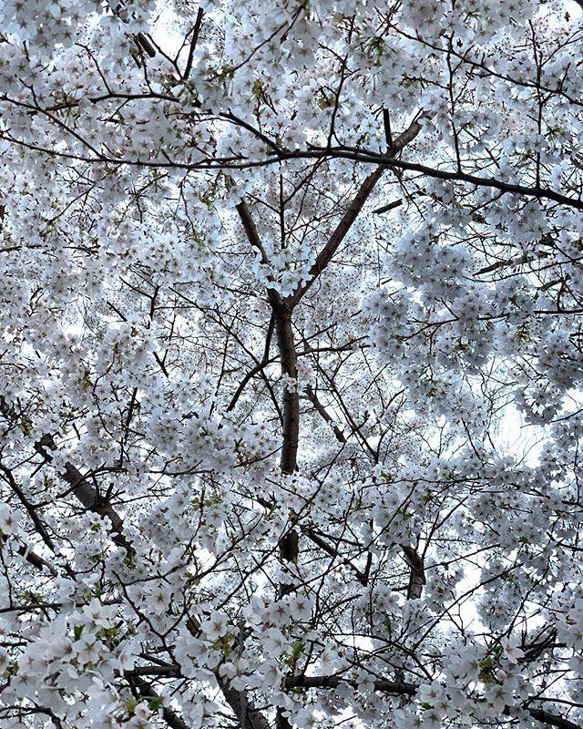 Spring. . . . . #fujifilmxt2#nyc#urban#streetshoot#matiasjofre#photographyislifee#photographyislife #photographysouls#photographyeveryday #photographylover#worldbestgram #iglobal_photographer #ig_great_pics #ig_myshot#shotwithlove#justgoshoot #xposuremag#icatching#collectivelycreate#wanderlust#heatercentral natgeowild #natgeo #natgeohub#natgeowildlife#natgeopl#natgeowild_hd #natgeoru #natgeopix#wildlifeperfection