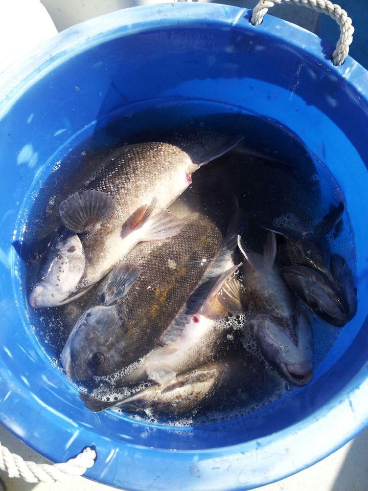 blackfish_bucket.jpeg