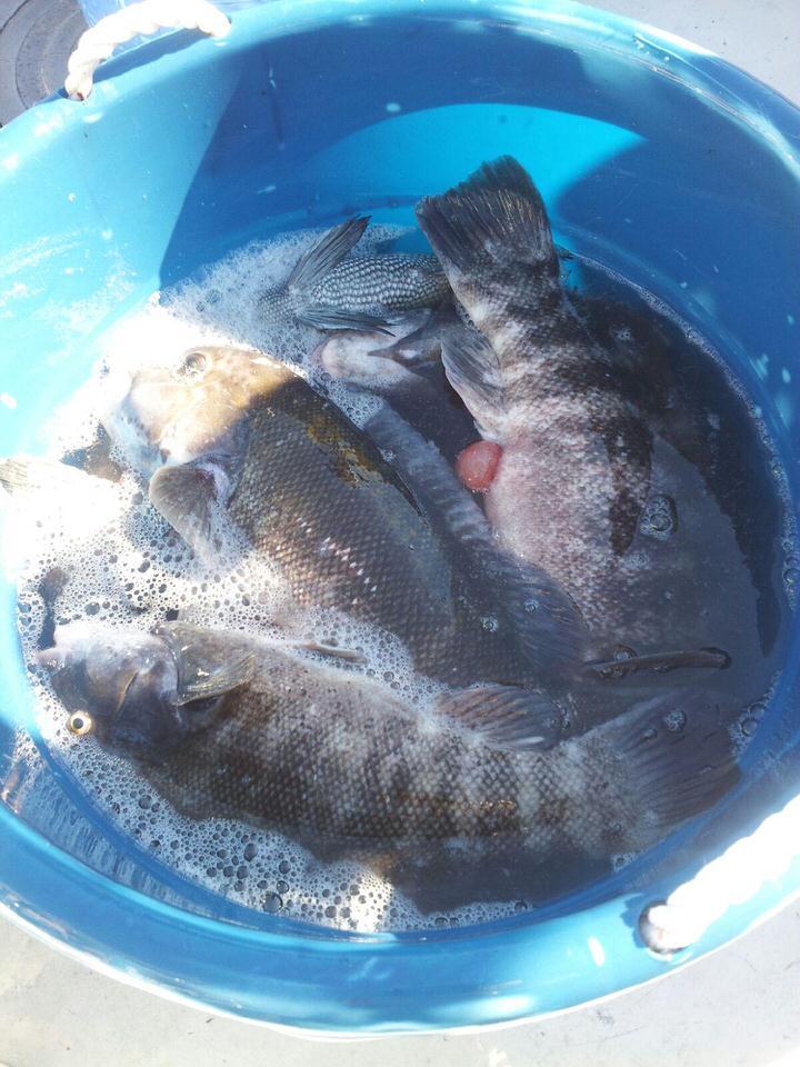 blackfish_bucket1.jpeg