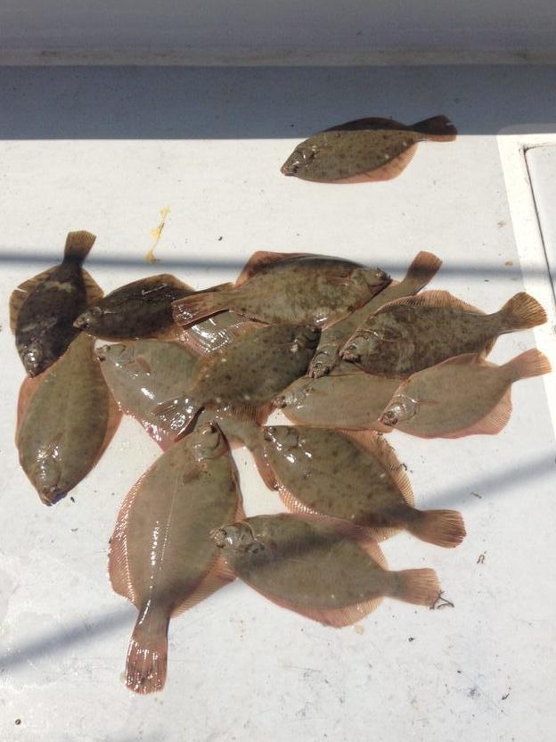 flounder_deck_hh.jpeg