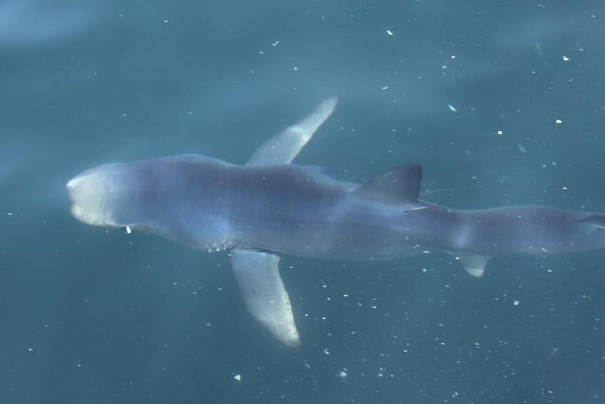 shark_underwater1.JPG